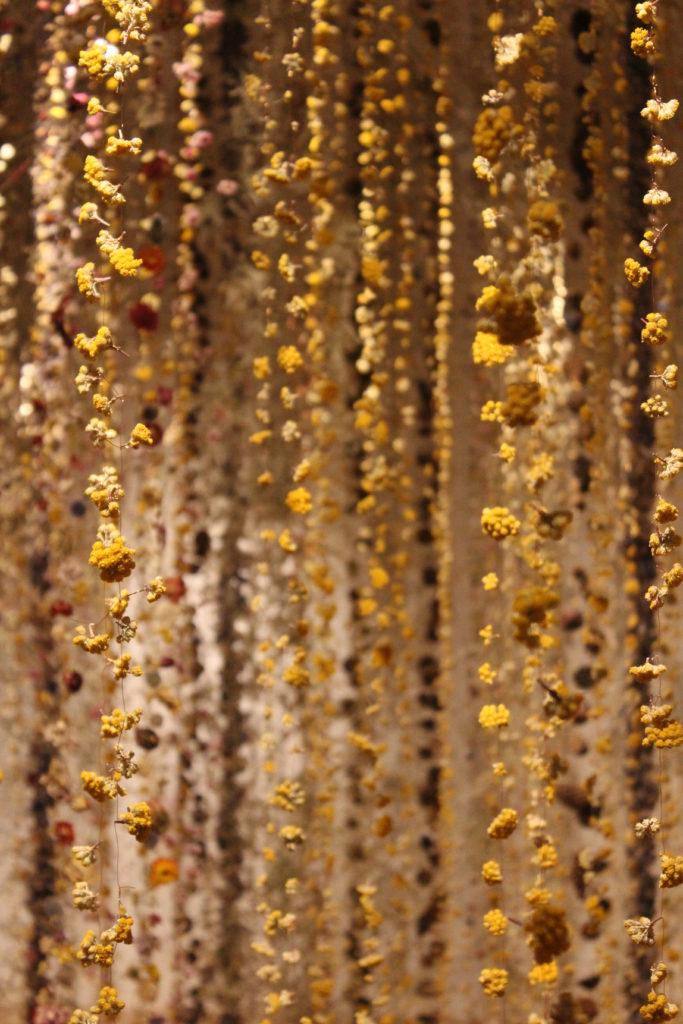 Dried Sanfordii Dried Helichrysum