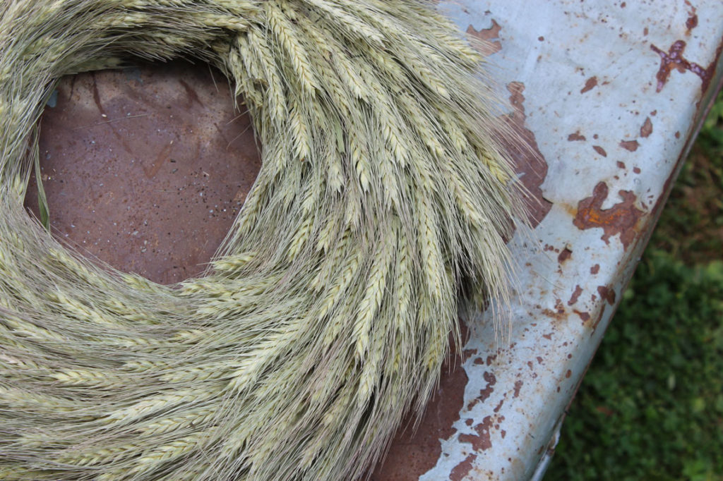 Triticale Natural Dried Grass Wreath 35cm