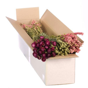Dried Flowers Mixed Box Pink