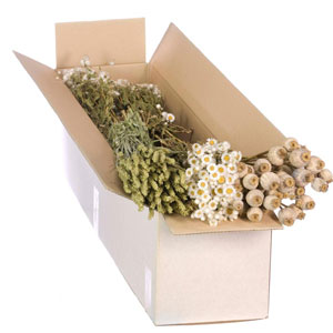 Florist Dried Mixed Box White