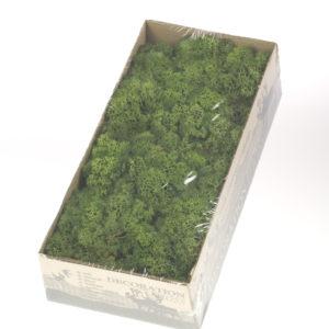 Dried Reindeer Moss, Moss Green