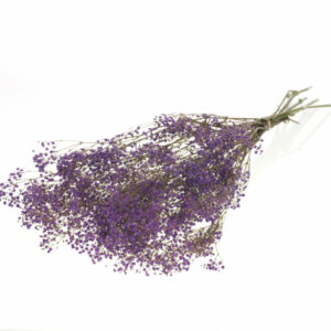 Dried Gypsophilla, Preserved, Bleached Lilac