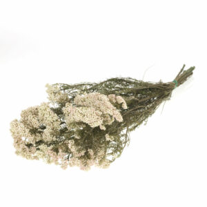 Dried Rice Flower, Preserved, Natural White