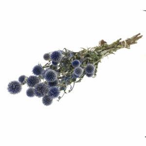Echinops, natural midnight blue glitter