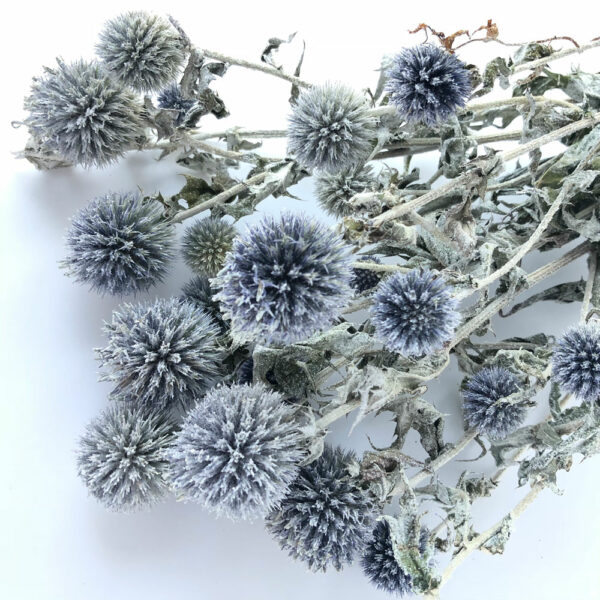 Echinops, natural frost & clear glitter