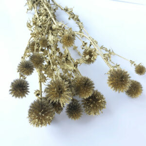 Dried Echinops, Gold, Gold Glitter