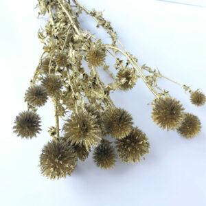 Dried Echinops, Gold, Gold Glitter