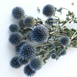 Dried Echinops, Natural Sky Blue Mix Glitter