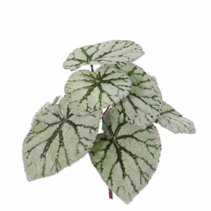 Artificial Begonia Rex, Grey/Green Plant