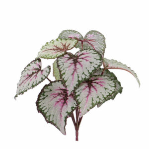 Artificial Begonia Rex, Red/Green Plant