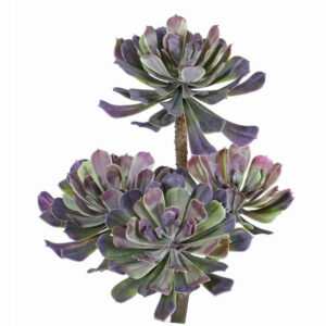 Faux Aeonium Bush, 4 Flowers