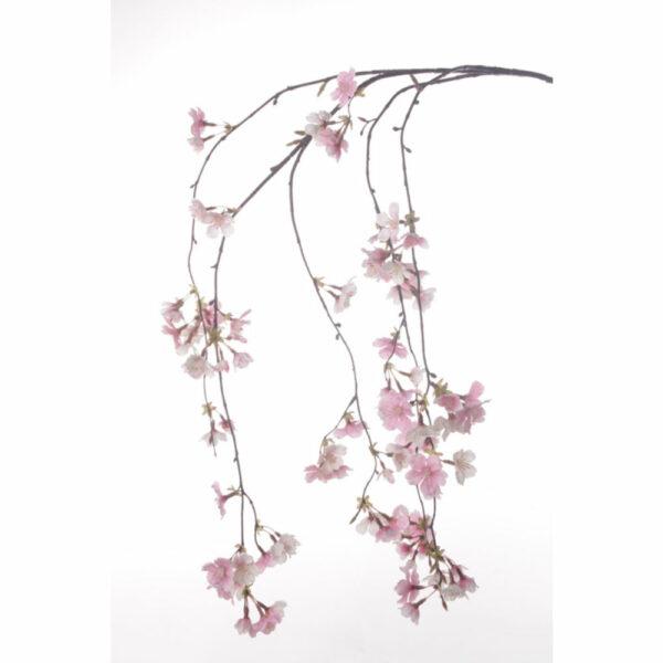 Cherry Blossom Rose