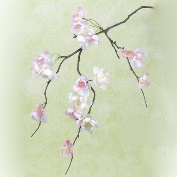 Cherry Blossom, rose pink