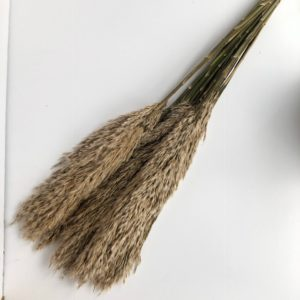 Dried Plume Reed, Ivory