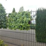 Grape leaf, hedge element