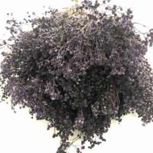 Dried Broom Bloom, Purple