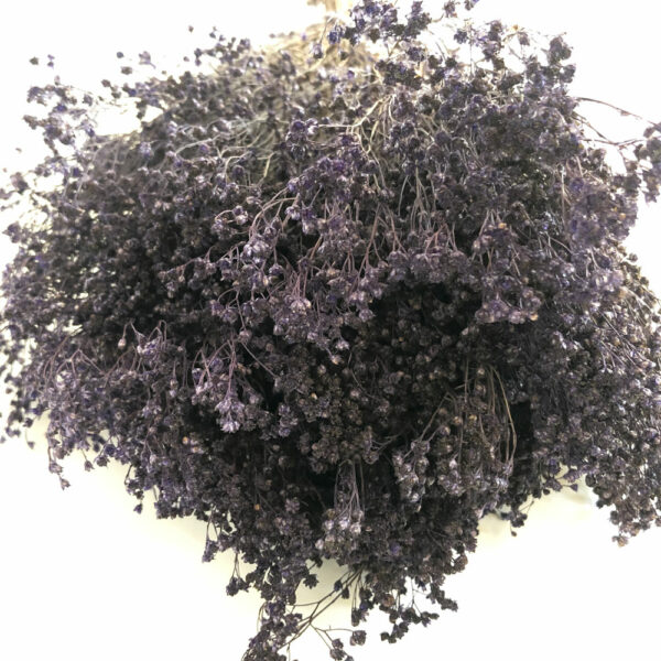 Dried Broom Bloom, Purple