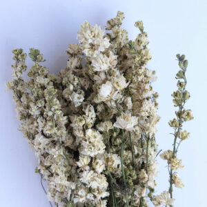 Dried Delphinium White