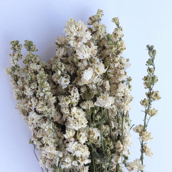 Dried Delphinium White