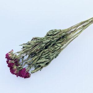 Dried Peony Purple