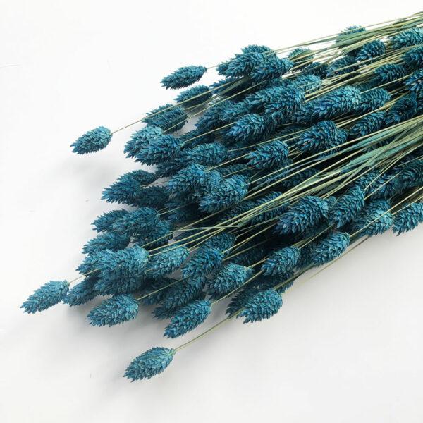 Dried Phalaris Blue