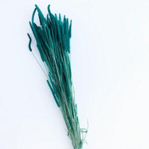 Dried Phleum, Timothy Grass, Petrol Green
