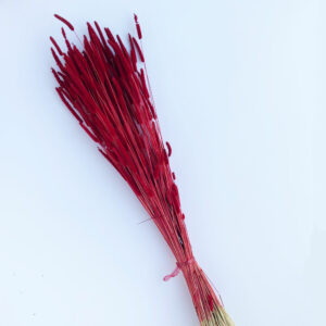 Dried Phleum, Timothy Grass, Red