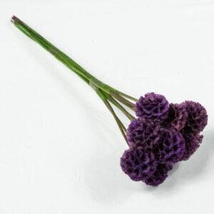Preserved Scabiosa stellata, Violet