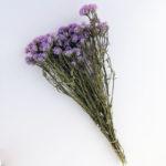 Dried Statice, sinuata, Light Lilac