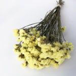 Dried Statice, sinuata, Yellow