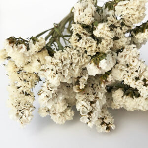 Dried Statice, sinuata, White