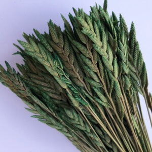 Dried Agropyron or Spiga d'oro