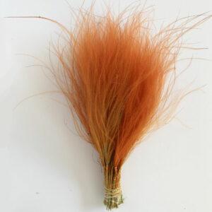 Dried Stipa Pennata, Orange, Troll Hair