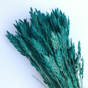 Dried Agropyron orSpiga d'oro