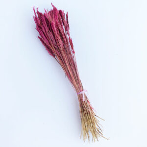 Dried Agropyron or Spiga d'oro, Pink