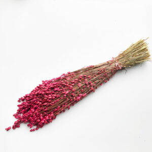 Dried Briza Maxima, Pink