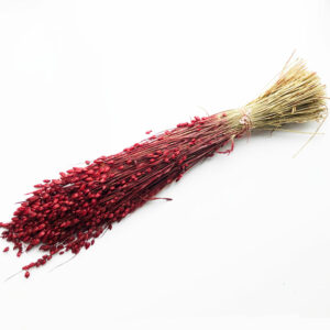 Dried Briza Maxima, Red