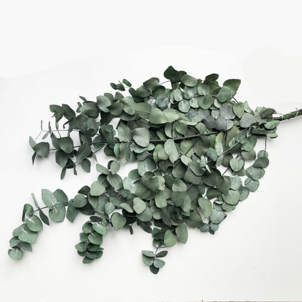 Preserved Eucalyptus Cinereal