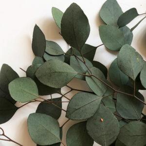 Preserved Eucalyptus populus, green