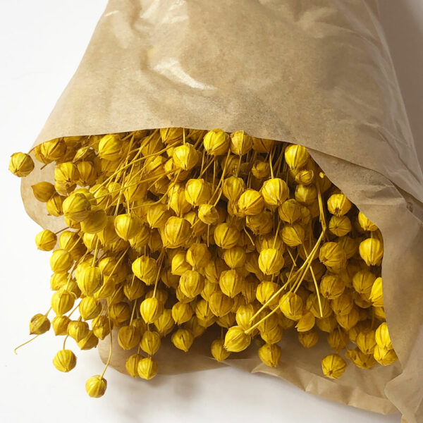 Dried Linum (Flax), Yellow