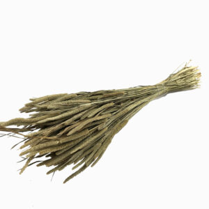 Dried Phleum, Timothy Grass, Natural