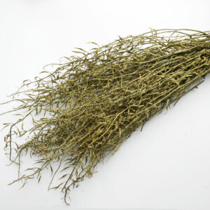 Dried Wild Mustard, Natural