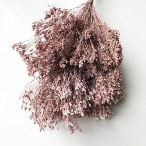 Broom-bloom-pink-wash