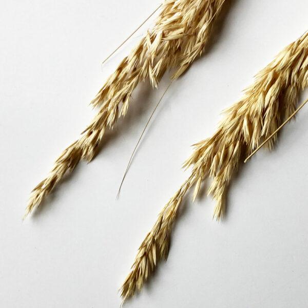 Dried Festuca Grass, 110cm