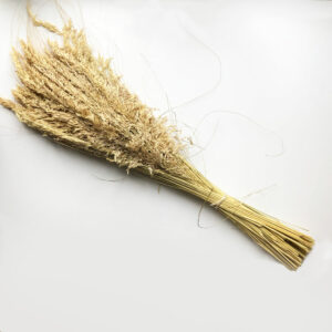 Dried Festuca Grass, 110cm