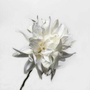Faux Dahlia, Cream
