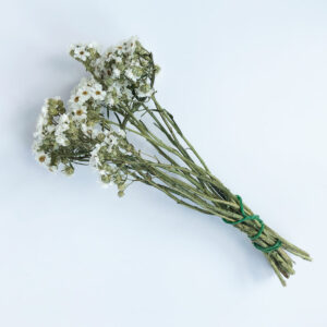 Dried Ixodia, Natural White, 30cm, 10 stem bunch