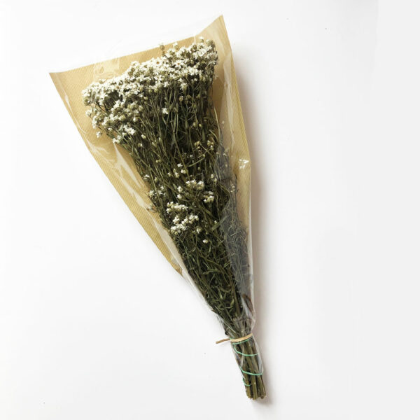 Dried Ixodia, Natural White, 50cm, 10 stem bunch