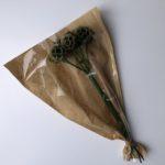 Preserved Scabiosa stellata, Natural