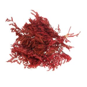 Dried Statice Tatarica Red